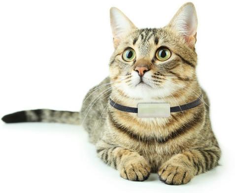 gps трекер для собак и кошек